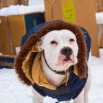 Powder knows what winters really all about... fashion!!  haha she loves this jac...