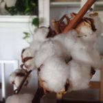 I keep a bouquet of cotton on my dining room table to remind myself that Dr. Mar...